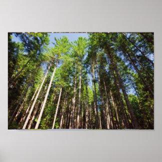 アメリカの樹木限界線オリンピック国立公園の高い木 ポスター