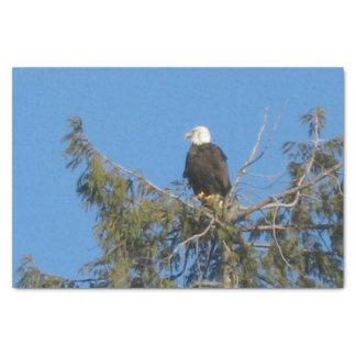 アメリカの白頭鷲のティッシュ 薄葉紙