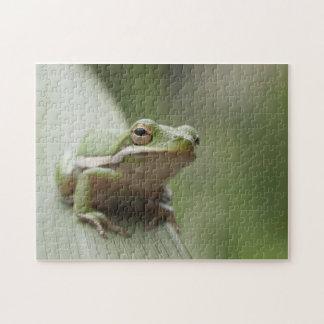 アメリカの緑のアマガエル(cinereaアマガエル属) ジグソーパズル
