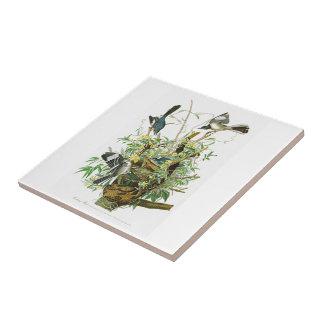 アメリカの鳥のジョン・ジェームズ・オーデュボンの欺く鳥 タイル