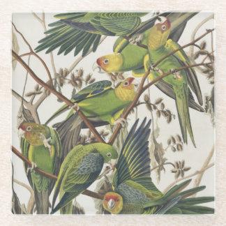 「アメリカの鳥」からのカロライナインコ、1829年 ガラスコースター