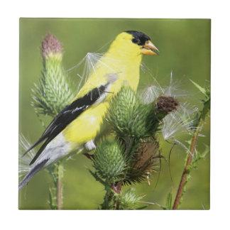 アメリカのGoldfinchの写真のタイル タイル