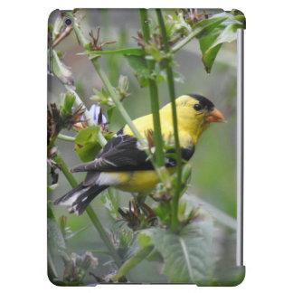 アメリカのGoldfinch