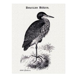 アメリカサンカノゴイのヴィンテージのイラストレーション ポストカード