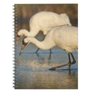 アメリカシロヅルのwintering ノートブック