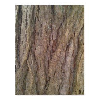 アメリカツガの樹皮 ポストカード