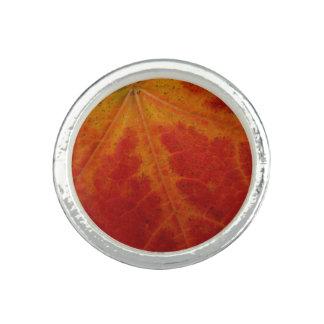 アメリカハナノキの葉の抽象芸術の秋の自然の写真撮影 リング