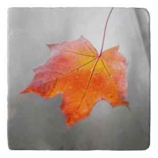 アメリカハナノキの葉-ビロードの秋 トリベット