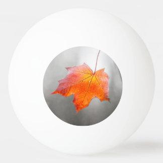 アメリカハナノキの葉-ビロードの秋 卓球ボール