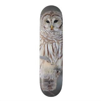アメリカフクロウの溝彫りVaria 19.7cm スケートボードデッキ