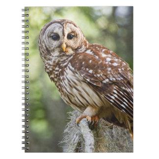 アメリカフクロウ(溝彫りのvaria)、古い成長の大人 ノートブック