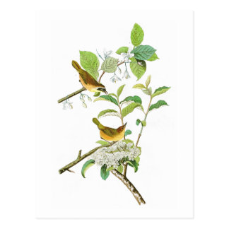 アメリカムシクイのジョン黄色いbreasted Audubonの鳥アメリカ ポストカード