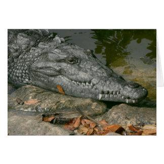 アメリカワニ、フロリダの沼沢地2010年 カード