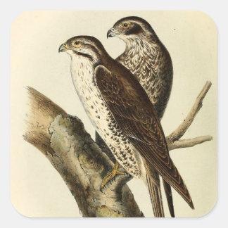 アメリカ人のLanierの《鳥》ハヤブサ スクエアシール