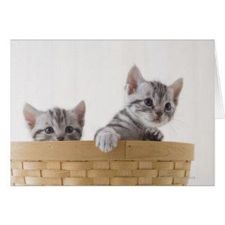 アメリカ人のShorthairの2匹の子ネコ カード