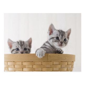 アメリカ人のShorthairの2匹の子ネコ ポストカード