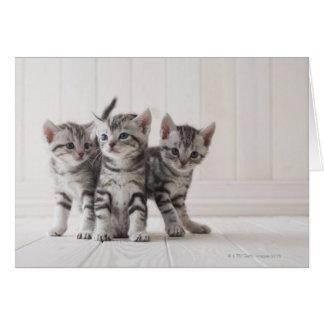 アメリカ人のShorthairの3匹の子ネコ カード