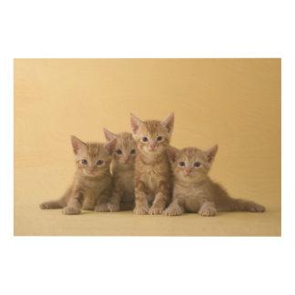 アメリカ人のShorthairの4匹の子ネコ ウッドウォールアート