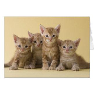 アメリカ人のShorthairの4匹の子ネコ カード