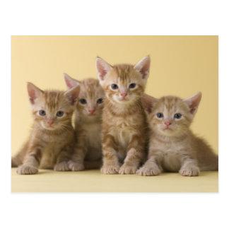 アメリカ人のShorthairの4匹の子ネコ ポストカード