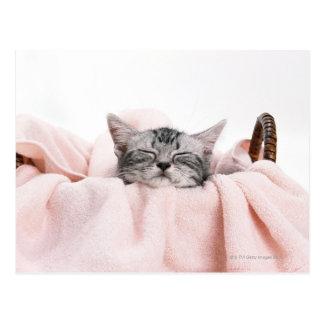 アメリカ人のShorthair猫 ポストカード