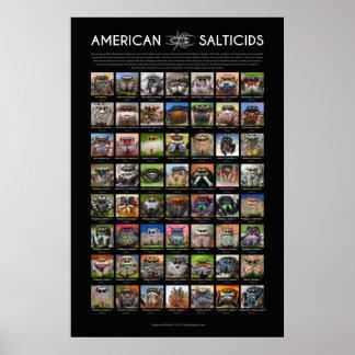 """""""アメリカ人Salticids""""の跳躍のくもはポスターに直面します ポスター"""