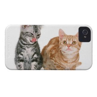 アメリカ人Shorthair 9 Case-Mate iPhone 4 ケース