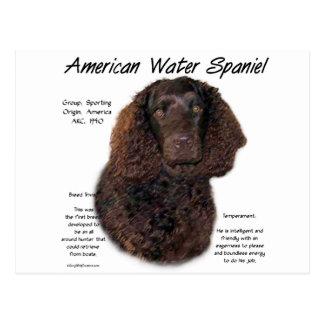 アメリカ水スパニエル犬の歴史のデザイン ポストカード