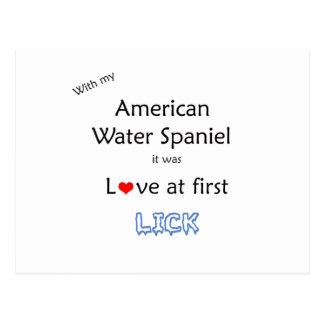アメリカ水スパニエル犬はデザインを舐めます ポストカード