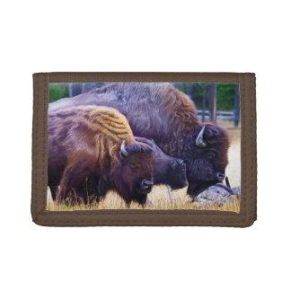 アメリカ野牛家族