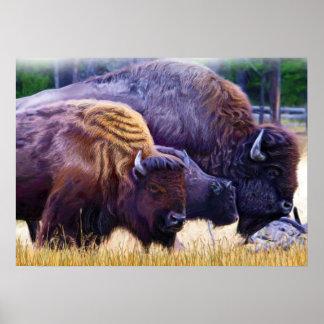 アメリカ野牛家族 ポスター