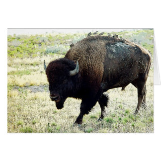 アメリカ野牛 カード