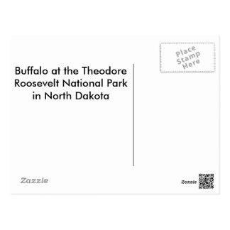 アメリカ野牛(バッファロー) ポストカード