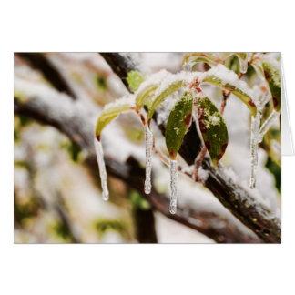 アメリカ・シャクナゲの葉のつらら カード