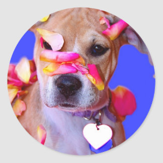 アメリカ(犬)スタッフォードテリアのボクサーの組合せの小犬 ラウンドシール