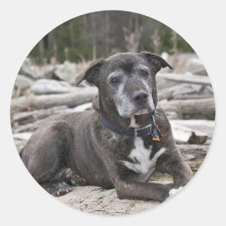 アメリカ(犬)スタッフォードテリア-ステッカー ラウンドシール