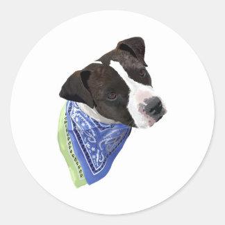 アメリカ(犬)スタッフォードテリア ラウンドシール