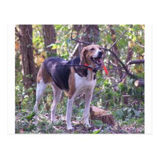アメリカFoxhound完全なhunting.png ポストカード