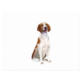 アメリカFoxhound (a) ポストカード