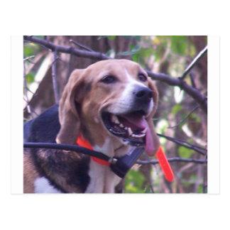 アメリカFoxhound.png ポストカード