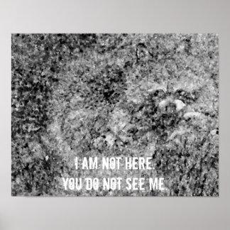 アライグマ私はここに野性生物ポスター自然いません ポスター