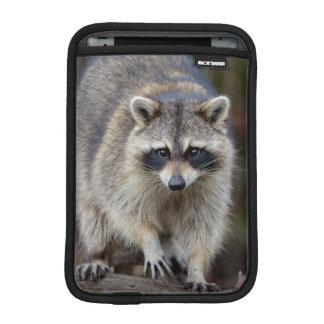 アライグマ、プロキオンのlotor、フロリダ、米国2 iPad miniスリーブ