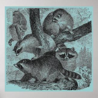 アライグマ ポスター