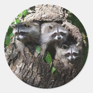 アライグマ- 3人の友達 ラウンドシール