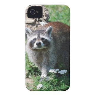 アライグマ Case-Mate iPhone 4 ケース