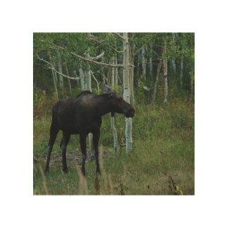 アラスカのアメリカヘラジカは《植物》アスペンの森林で歩き回ります ウッドウォールアート