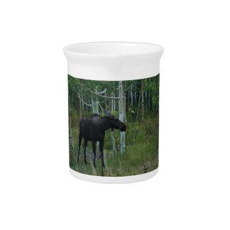 アラスカのアメリカヘラジカは《植物》アスペンの森林で歩き回ります ピッチャー