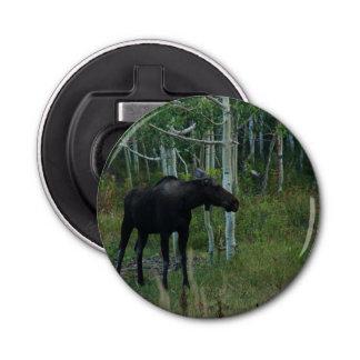 アラスカのアメリカヘラジカは《植物》アスペンの森林で歩き回ります 栓抜き