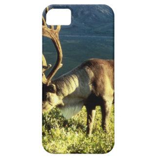 アラスカのカリブー iPhone SE/5/5s ケース