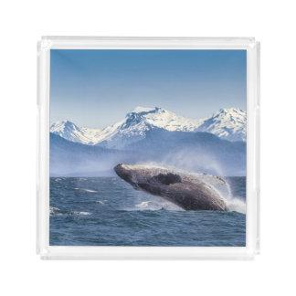 アラスカのザトウクジラを破ること アクリルトレー